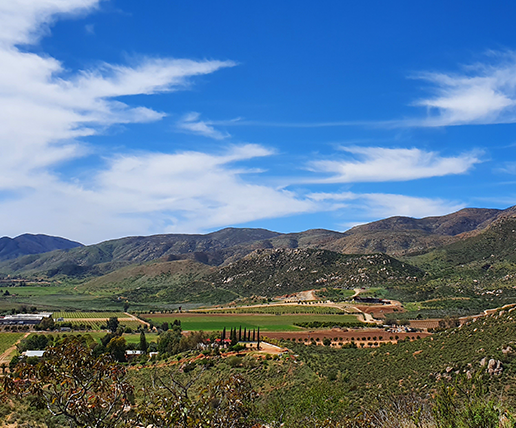 chichihuas-valle-de-guadalupe-536x458-1-516x428